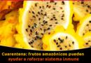 Cuarentena Frutos Amazónicos