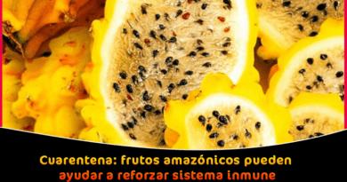 Cuarentena frutos amazónicos pueden ayudar a reforzar sistema inmune Ayacucho